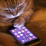 котка може да отключи iPhone