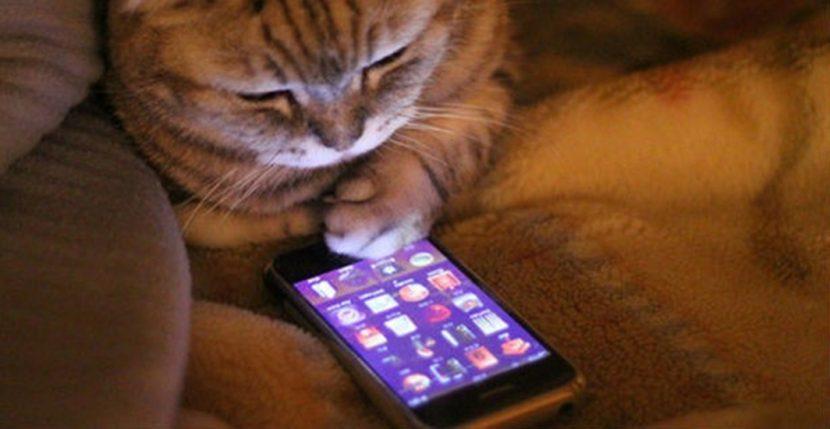 И котка може да отключи iPhone. Вижте това  видео
