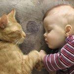 Коте спаси бебе